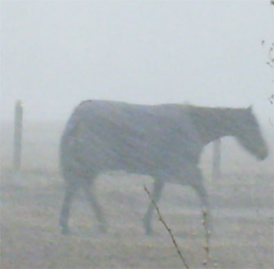 Horse bracing against wind during snow fall, March 31, 2009