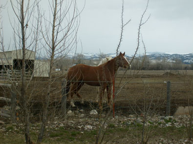 horses outside hamshack